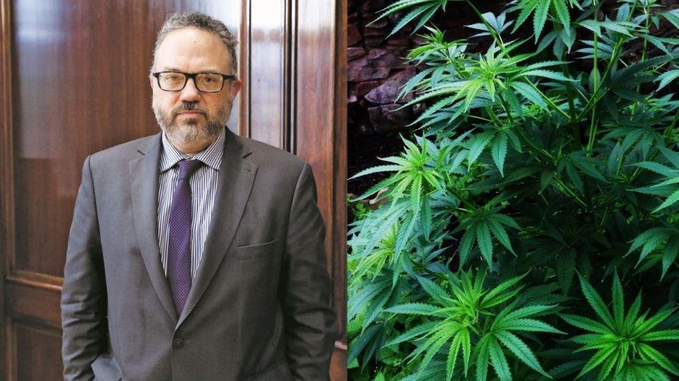 """Kulfas le da luz verde a la legalización de la marihuana para uso medicinal: """"Es una oportunidad para aumentar exportaciones"""""""